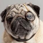 【Dogocle】犬用眼鏡がメガネブランドWarby Barkerより販売開始!?