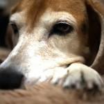 犬って可愛いなぁとしみじみ思える動画2本叱られる時って万国共通ね