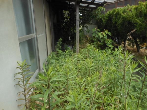 雑草ジャングル