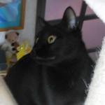 【人気のキャットタワー購入】オシャレで省スペース且つ立体的!室内飼い猫のダイエットにもオススメかも