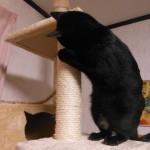【動画アリ!室内飼いネコの壁ガリガリ問題・爪とぎ防止と解消事例】キャットタワーが意外と効果を発揮する!?