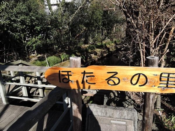 mishima (74)