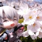 【香川県さぬき市の花見スポット・亀鶴公園】2015年度の桜は満開寸前!見に行くなら急げ!