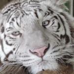 【しろとり動物園「アクセスと周辺観光情報付き」レビュー】東かがわ市観光前に読みたい記事やで!