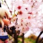 【桜フリー写真!厳選7スポット】春雨に夜桜!四国は香川県と徳島県の花見スポット巡り