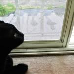 【すげー簡単!網戸の張り替え方法】DIY修理の目安費用とコツ!猫に破壊されたので直してみた