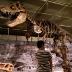 あちこちで開催中の恐竜展は夏休みの自由研究のネタの宝庫