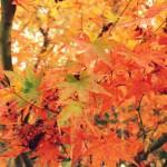 【香川県!秋の六大「紅葉」スポット2015】ドライブやツーリング!周辺の美味しいお店!