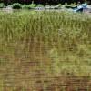 【田舎はもう嫌】都会(東京・大阪)から田舎暮らしを始めたら後悔する7つの理由